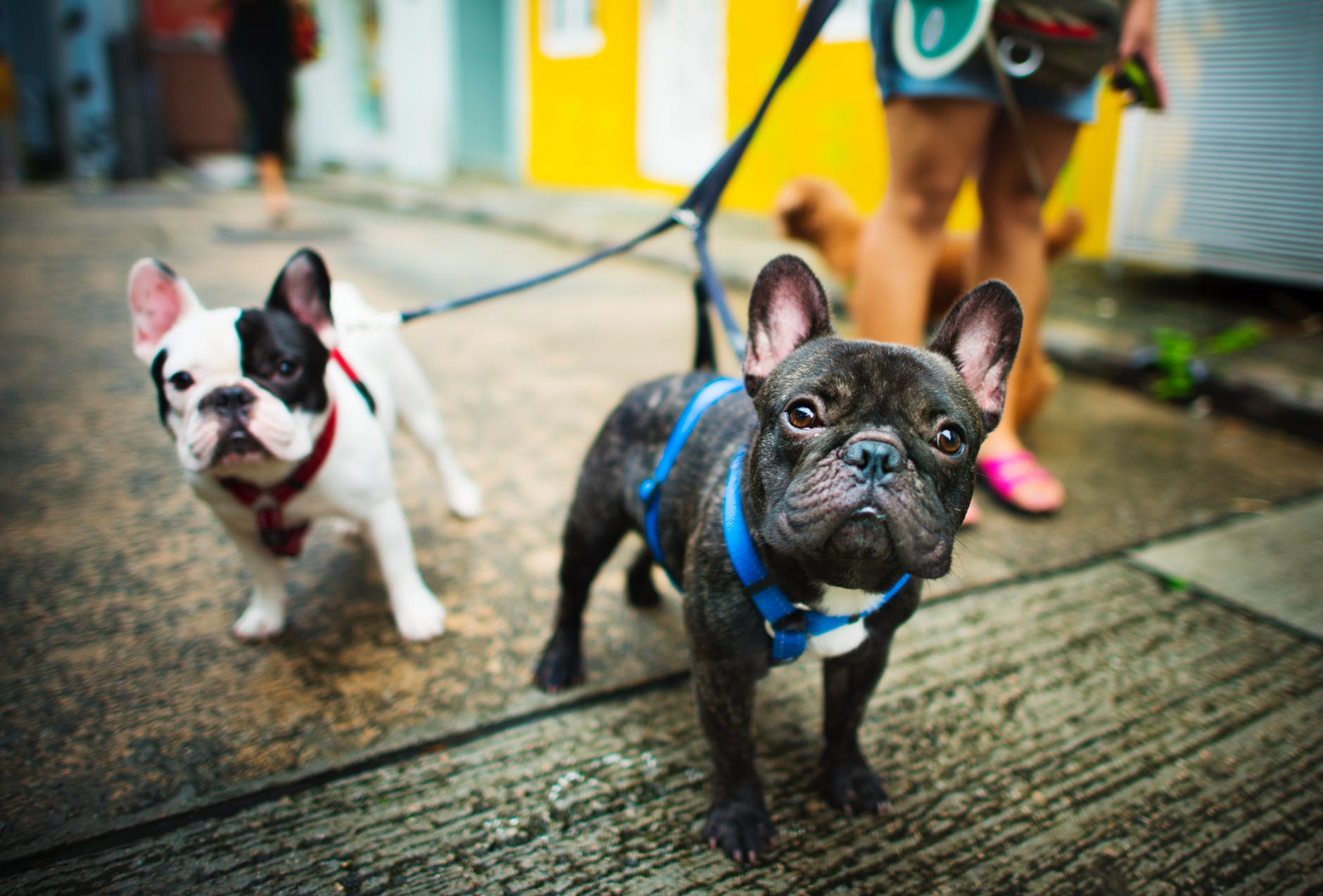 Succeeding in the Dog Care Business: From Underdog to Top Dog