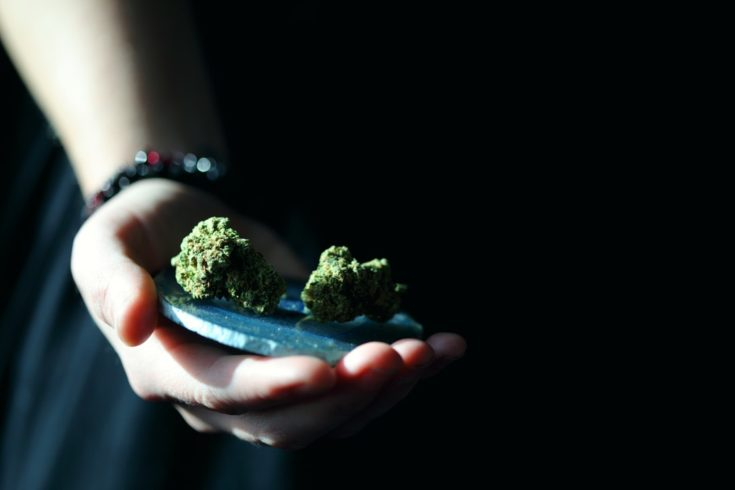 How to Get Into the Marijuana Business and Make Legally High Profits